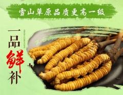 西藏特產蟲草 10根 0.3克